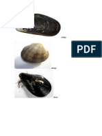 moluscos.docx