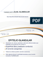 4. Epitelio Glandular