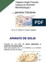 Aparato de Golgi.pptx