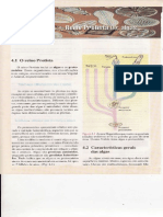 Cap.4 Reino Protista(i) Algas