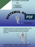 sistemul osos (1)