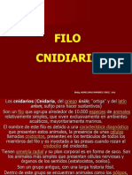 Filo Cnidaria1
