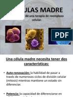 celulas madres.ppt