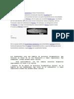fusilinidos.docx
