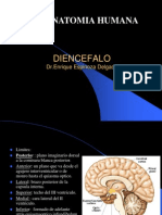 Diencefalo -Anatomia i