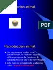 Reproducción Animal.