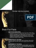 Curs 14. Sistemul Nervos Central