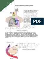 Anatomyerer n Fisiology