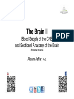 Blood Supply and Sections of the Brain