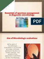 Essentials of Specimen Management in Diagnostic Microbiology