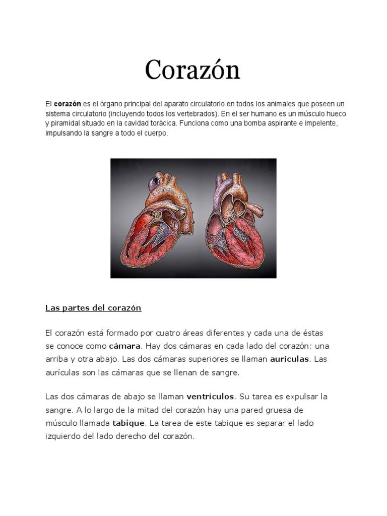 Increíble Diferentes Partes Del Corazón Cresta - Imágenes de ...