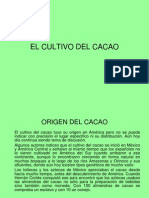 1. Clase Cacao
