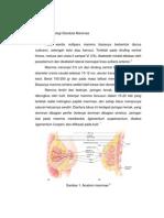 Anatomi Dan Fisiologi Glandula Mammae