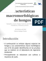 Características Macromorfológicas de Hongos