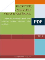 Sistema Escretor, Sistema Nervoso, Veias e Artérias.