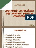 28, Patologia Aparato Femenino