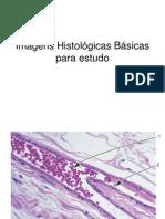 Imagens Histologicas Basicas Para Estudo de Microscopia