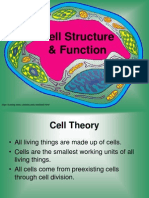 Cell Organelles (Notes)