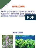 mecanismos-nutricion