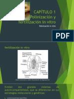 Polinizacion in Vitro