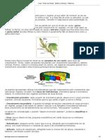 Caule - Partes Das Plantas - Botânica e Biologia - InfoEscola