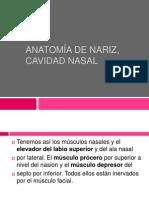 Anatomía de Nariz, Cavidad Nasal