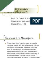 Bases Biologicas de La Conducta Capitulo 2 1226609