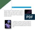 ADN Bioquimica