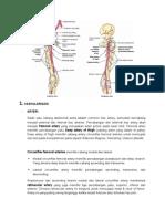 Vaskularisasi Lower Limb