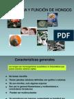 microbiologia-hongos