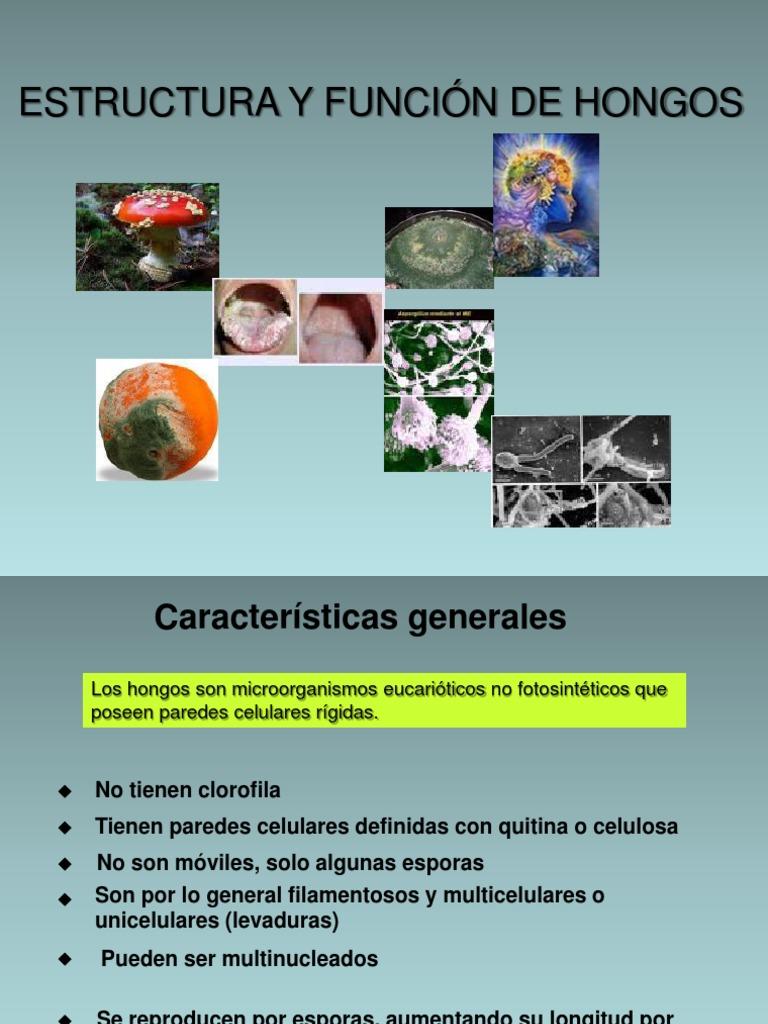 Microbiologia Hongos Hongo Mitocondria