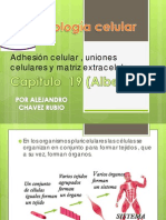 Uniones Celulares Biologia Celular
