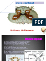 Histologia Medula Espinal y Fibras Nerviosas.