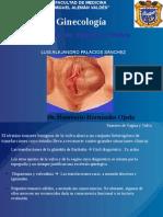 tumoresdevaginayvulva-130416192508-phpapp01