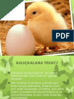veteriner parazitoloji sunumu.pptx