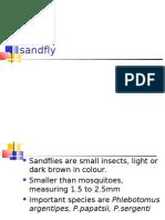 Sand Fly