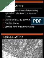 Module 2 - Basal Lamina, Cell Polarity, Cell Renewal