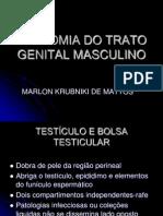 Anatomia Do Trato Genital Masculino Atualizado
