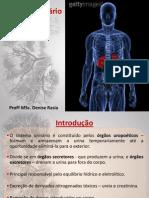 AULA 5 - Sistema Urinario