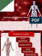 Anatomía de Las Arterias
