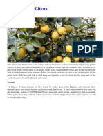 Cool Climate Citrus Gardening