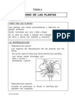 2 Las Plantas