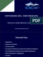 Cetáceos del Nor-Oriente de Venezuela (2006)