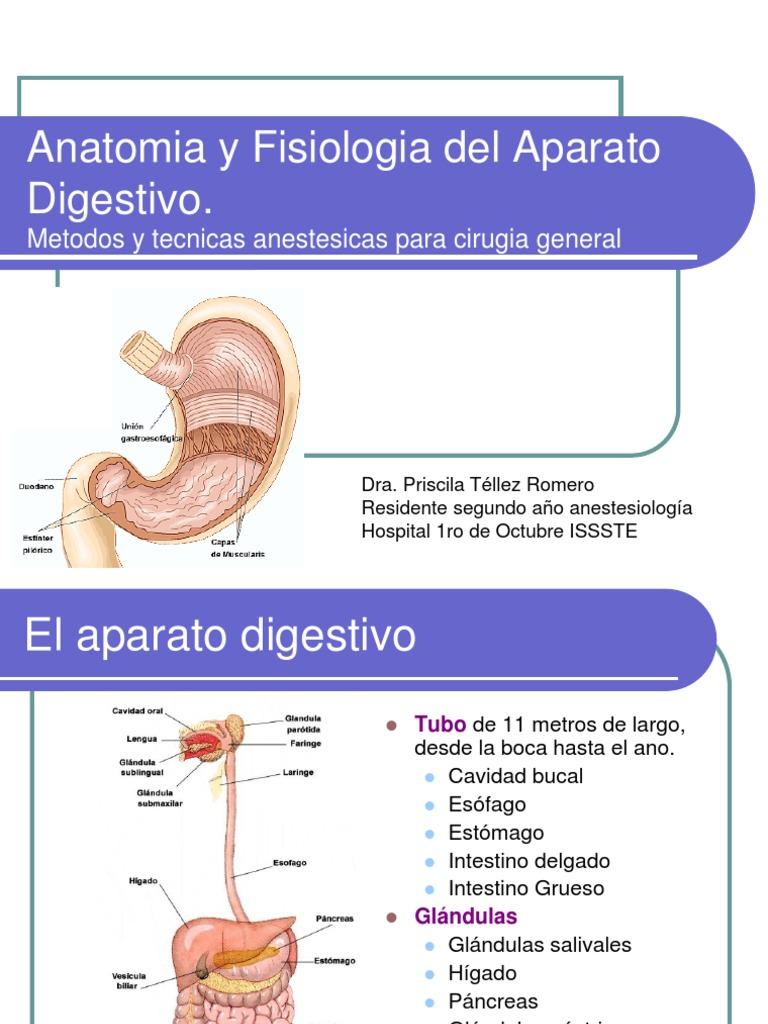 Anatomia Y Fisiologia De Aparato Digestivo Ppt - Best Hawaiian Deals