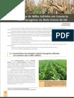 03 - Consorcio Milho Safrinha Pastagens_848651581 (1)