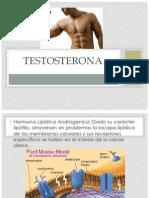 TESTOSTERONA.pptx
