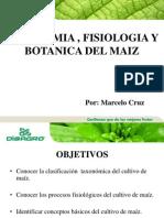 Taxonomia Fisiologia y Botanica Del Maiz