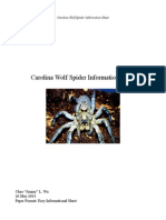 Carolina Wolf Spider Information Sheet