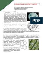 Observacion de Estomas y Cloroplastos