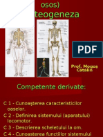 137157448 Scheletul Uman Osteogeneza